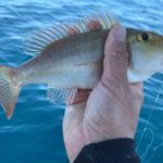 jetski fishing palm reef gold coast